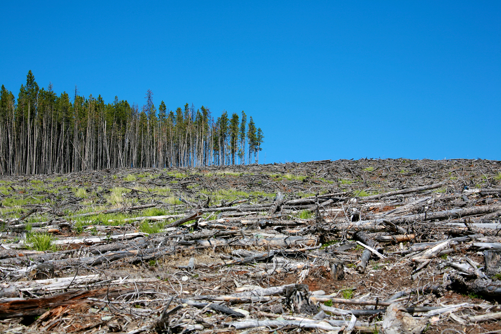 Deforestation present in a woodland.